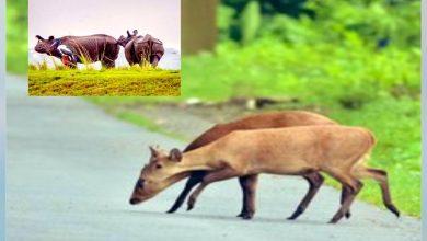 Photo of অসম বন্যা: জলের তলায় কাজিরাঙা, জাতীয় সড়কে ঘুরে বেড়াচ্ছে বন্যপ্রাণীরা