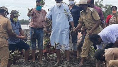 Photo of সুন্দরবনে পযটকদের আর্কষনের জন্য ১৩ হাজার ম্যানগ্রোভ রোপণ
