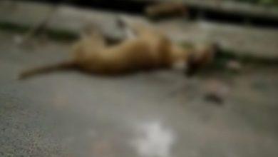 Photo of কুকুরকে পিটিয়ে মারার ঘটনায় উত্তেজনা বারাসতে, ক্ষুব্ধ পশুপ্রেমীরা